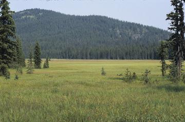 Canadian Rockies Ecoregion scene